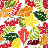 Autumn leaves seamless pattern. Flat style Royalty Free Stock Images