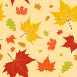 Autumn leaves seamless pattern. Autumn seamless pattern with maple and oak leaves Stock Images
