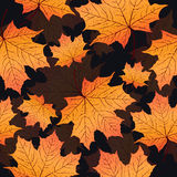 Autumn leaves, seamless pattern, vector background. Yellow orange maple leaf on a black background. For the design of wallpaper, fabric, decoration material Royalty Free Stock Image
