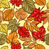 Autumn leaves seamless pattern Royalty Free Stock Photos