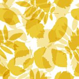 Autumn leaves seamless pattern for your design Stock Image