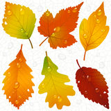 Autumn leaves and seamless vein background Stock Images