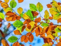 Autumn Leaves. During autumn season Stock Photos