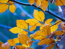 Autumn Leaves. During autumn season Stock Image