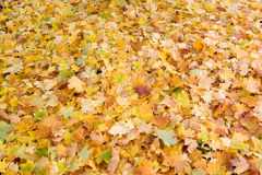 autumn leaves season - background Stock Photos