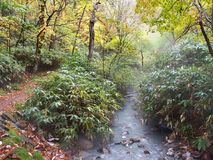 The Autumn Leaves season in Hokkaido ,Japan Stock Images