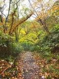 The Autumn Leaves season in Hokkaido ,Japan Stock Photos