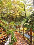 The Autumn Leaves season in Hokkaido ,Japan Stock Photography