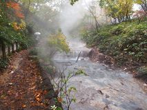The Autumn Leaves season in Hokkaido ,Japan Royalty Free Stock Image