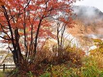 The Autumn Leaves season in Hokkaido ,Japan Stock Image