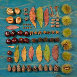 Autumn leaves, seeds and fruits in square on cyan stock photo