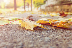 Autumn leaves. Selective focus on autumn leaves on the sidewalk as seen from a worm's eye view Stock Photography