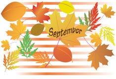 Autumn leaves - September - vector. Vector illustration with autumn leaves - September month Stock Photos