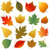 Autumn leaves set Stock Photography