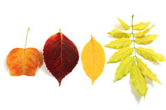 Autumn leaves set Stock Image