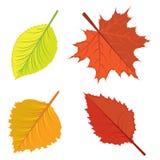 Autumn leaves set Royalty Free Stock Photo