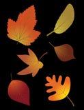 Autumn leaves set on black background Royalty Free Stock Image