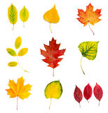 Autumn leaves set Royalty Free Stock Photos