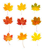 Autumn leaves set Royalty Free Stock Photo