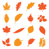 Autumn leaves set. Collection of simple, drawn in a vector autumn leaves isolated on a white background vector illustration
