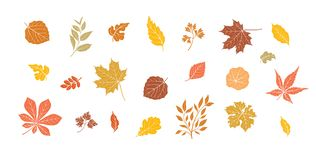 Free Autumn Leaves Set. Fall Leaf Floral Icons Over White Background. Nature Symbol Collection Stock Photo - 158686800