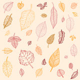 Autumn leaves  set Stock Photo