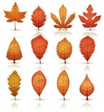 Autumn Leaves Set. Illustration of a set of autumn and fall season orange, red and yellow leaves, from various plants and trees species Stock Image
