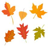 Autumn leaves set, isolated on white background Stock Photos