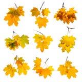 Autumn leaves set isolated on white background. Stock Photo