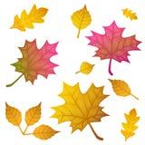 Autumn leaves set, isolated on white background. flat style, vector illustration. Autumn leaves set, isolated on white background. vector illustration flat Royalty Free Stock Images