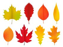 Autumn leaves set, isolated on white background. Realistic vector image stock illustration