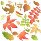Autumn leaves set. Isolated on white background.Vector illustration Stock Photo