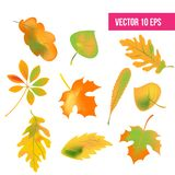 Autumn leaves set, isolated on white background. vector illustration. fall autumn leaves, icon pack royalty free illustration