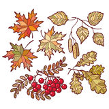 Autumn leaves. Set Stock Photography
