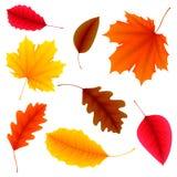Autumn Leaves Set Royalty Free Stock Photos