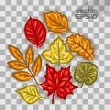 Autumn leaves set Royalty Free Stock Image