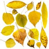 Autumn leaves set. White isolated Royalty Free Stock Photos