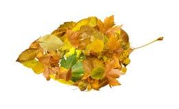 Autumn leaves set. White isolated Stock Photo
