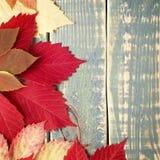 Autumn leaves on shabby vintage wood Stock Photos