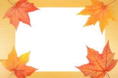 Autumn leaves and sheet of paper Stock Image