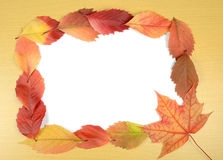 Autumn leaves and sheet of paper Royalty Free Stock Photos