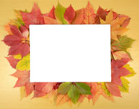 Autumn leaves and sheet of paper Stock Photos