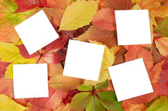 Autumn leaves and sheets of paper Royalty Free Stock Photo