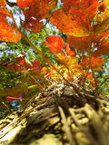 Autumn Leaves in Shillong Stock Photo