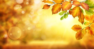 Autumn leaves on shimmering bokeh background Stock Image