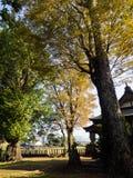 Autumn leaves in Shimomiya shrine inside Aso volcanic caldera. Part of Aso-Kuju National Park - Kumamoto prefecture, Japan stock images
