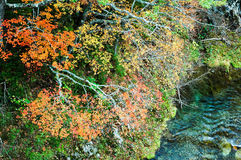 Autumn Leaves in Shiretoko, Hokkaido, Japan royalty-vrije stock foto's