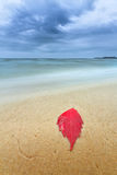 Autumn leaves on the shore of the beach Royalty Free Stock Photos