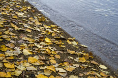 Autumn leaves on the shore of a lake Stock Photos