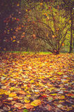 Autumn leaves and shrub Royalty Free Stock Image